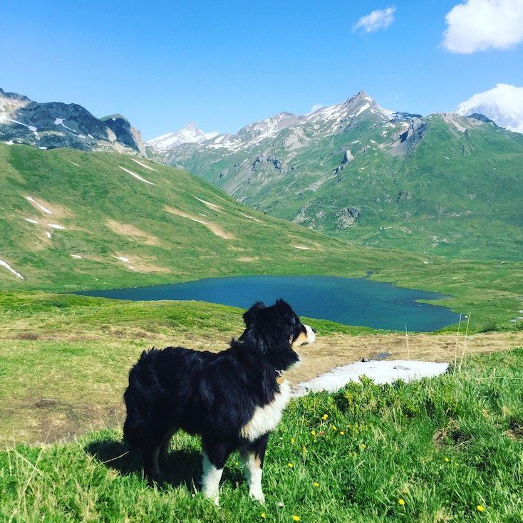 Alpenpass Frankreich Hund Wohnmobil Camping Roadtrip St Bernhard Pass Alpen Berge