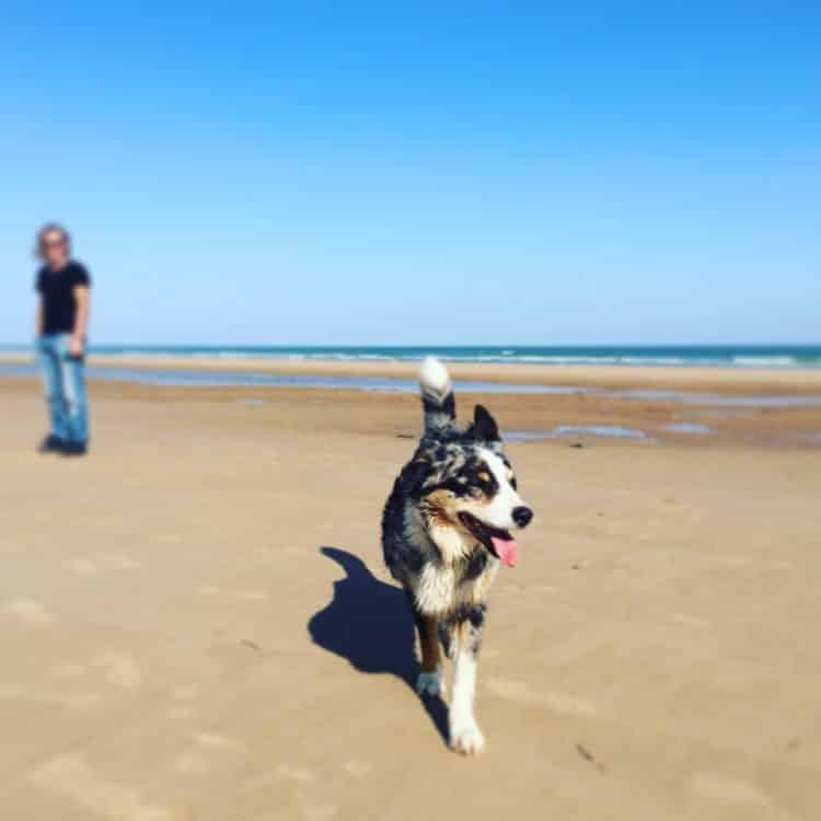 Hund Reise Camping Atlantik Normandie