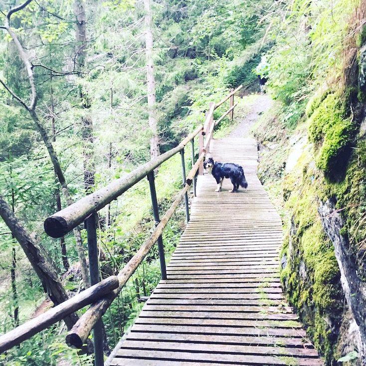 Alpe-Adria-Trail Hund wandern Wanderung Weitwandern Kärnten