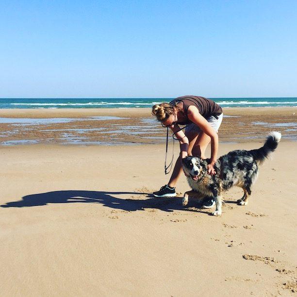 Hund Normandie Atlantik Reisen Camping