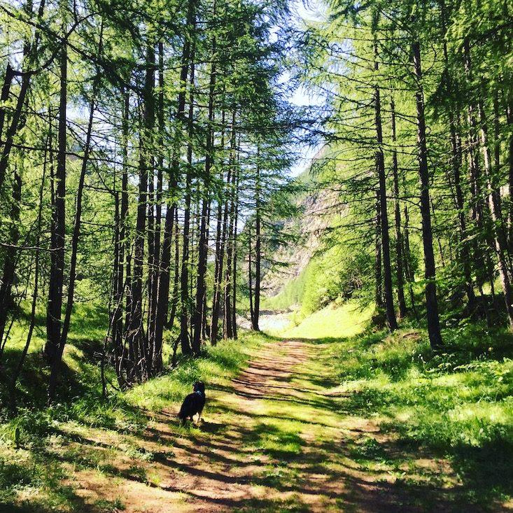 Val Cenis Bessans GR5 wandern mit Hund Weitwandern Fernwanderweg Frankreich Alpen