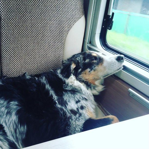 Welthundetag Camping Hund Australian Shepherd Campingbus Wohnmobil
