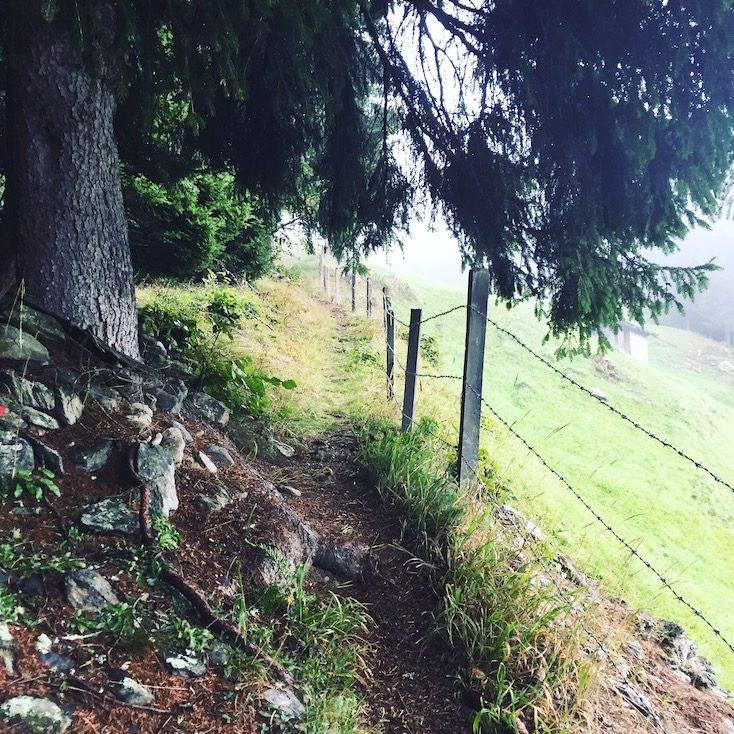 Alpe Adria Trail Weitwandern Hund Kärnten Mölltal Wanderung