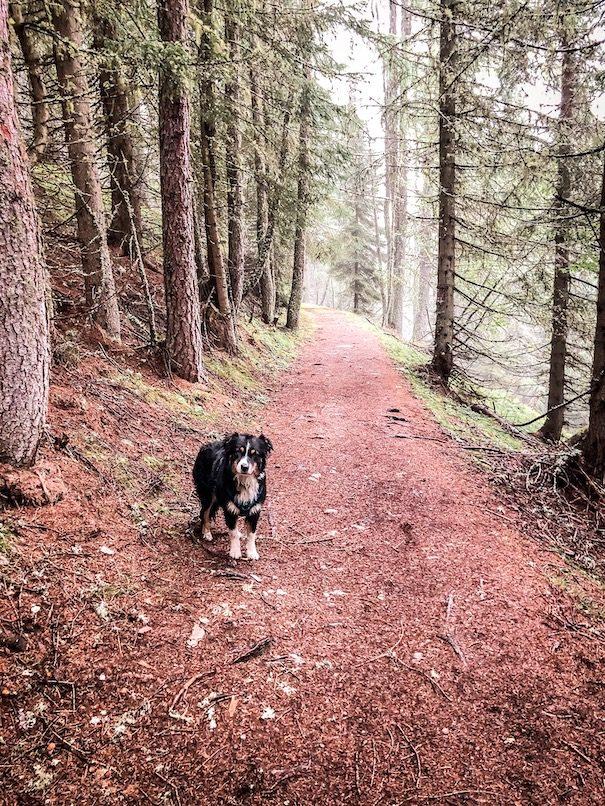 Alpe-Adria-Trail mit Hund Weitwandern Fernwandern Wanderweg Kärnten