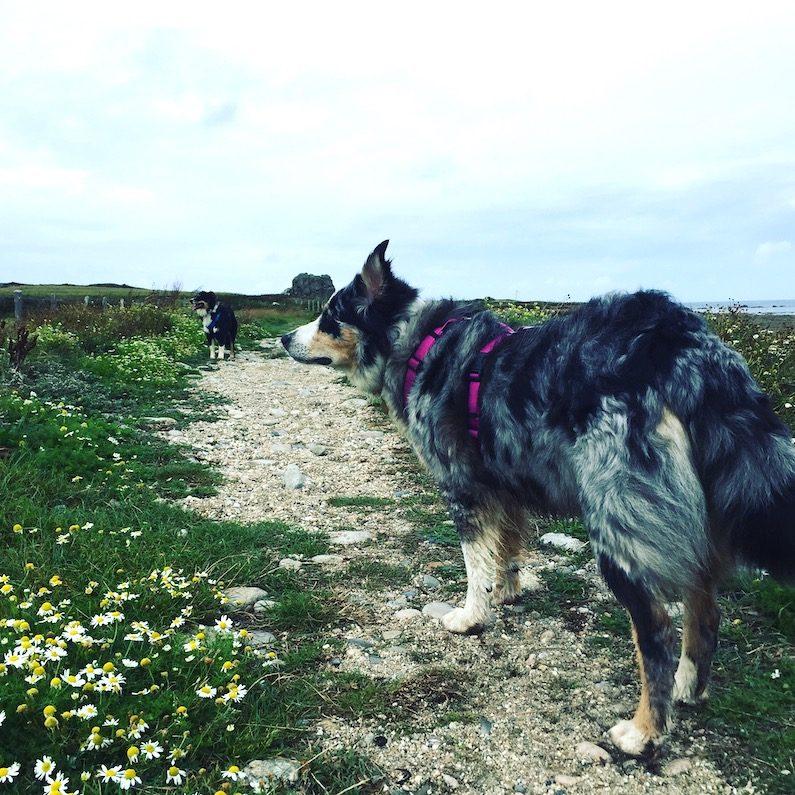 Cotentin La Manche Normandie wandern Wanderung Hund Küstenwanderweg Zöllnerweg Sentier du Littoral