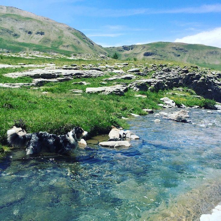 Frankreich Reisen mit Hund Camping Wildcamping Alpenpässe Rundreise Frankreich Australian Shepherd