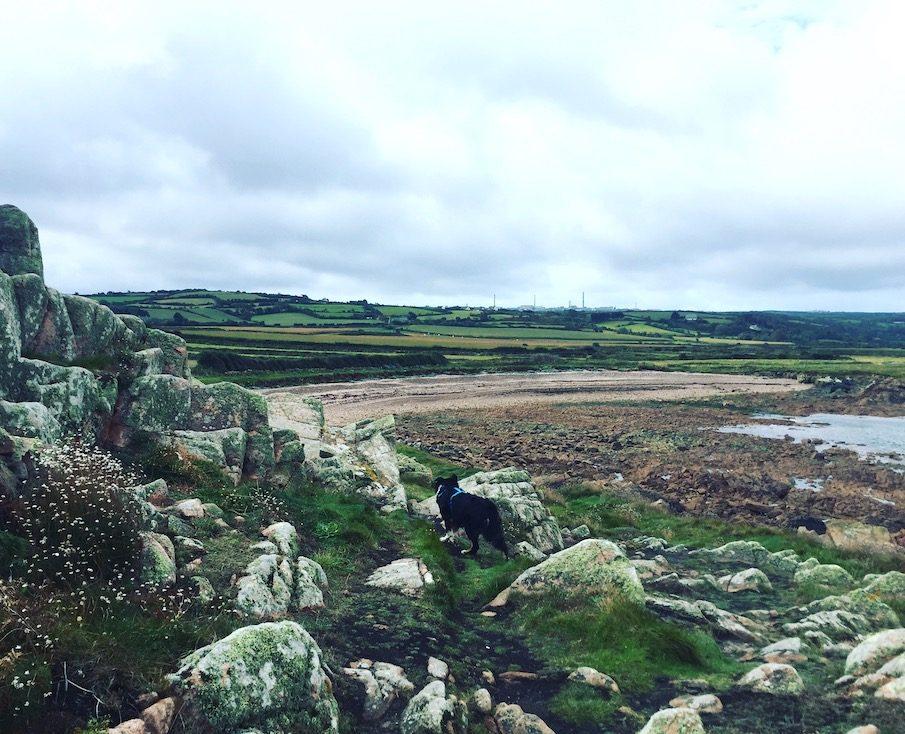 La Hague Normandie Frankreich Wandern Hund Weitwandern Sentier du Littoral Zöllnerweg