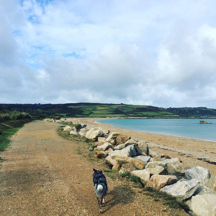 La Manche Frankreich Normandie Wandern Hund Weitwanderweg Zöllnerweg GR 223 Atlantik