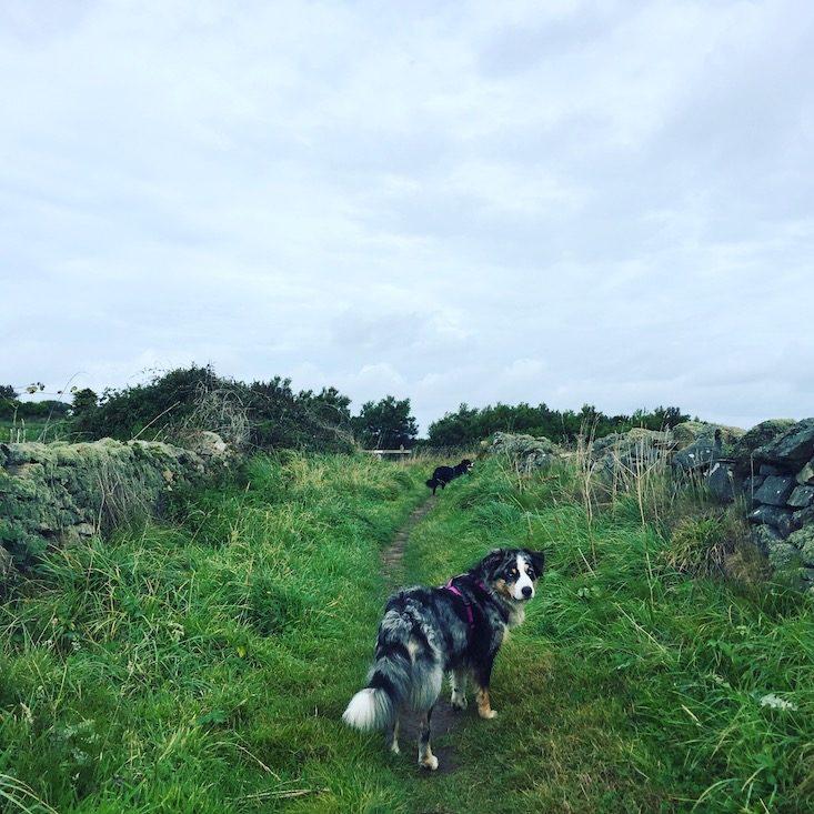La Hague Normandie Cotentin La Manche wandern Wanderung Hund