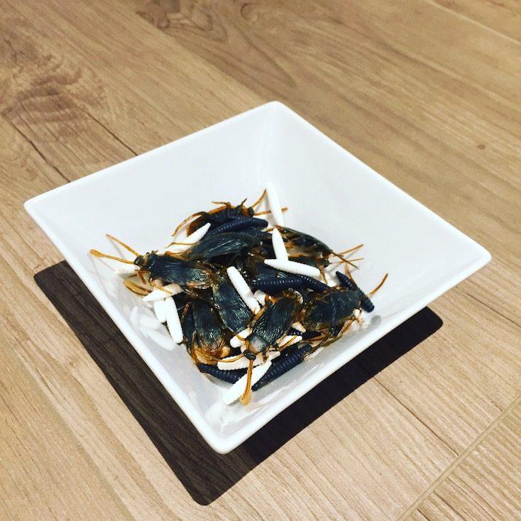 Hundefutter aus Insekten Käfer Grillen Entomophagie