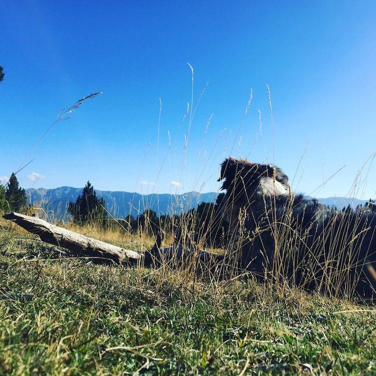 Camping mit Hund Spanien Pyrenäen Katalonien Wandern