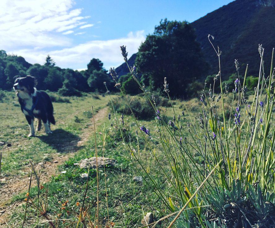 Südfrankreich Frankreich Wandern mit Hund Weitwanderweg Aude Pays cathare Sentier Cathare wildkräuter