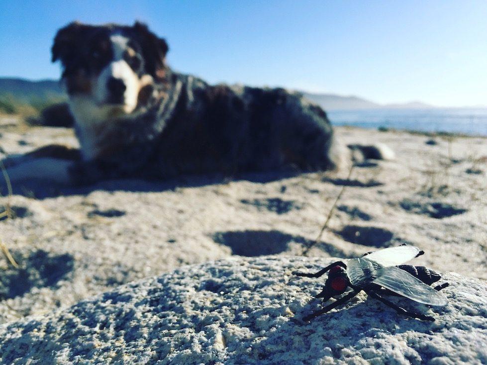 Hundefutter aus Insekten Bellfor schwarze Soldatenfliege