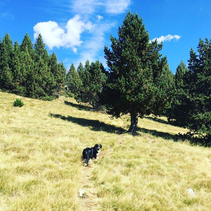 Wandern mit Hund Australian Shepherd Spanien Katalonien Pyrenäen Refugi Cap del Rec