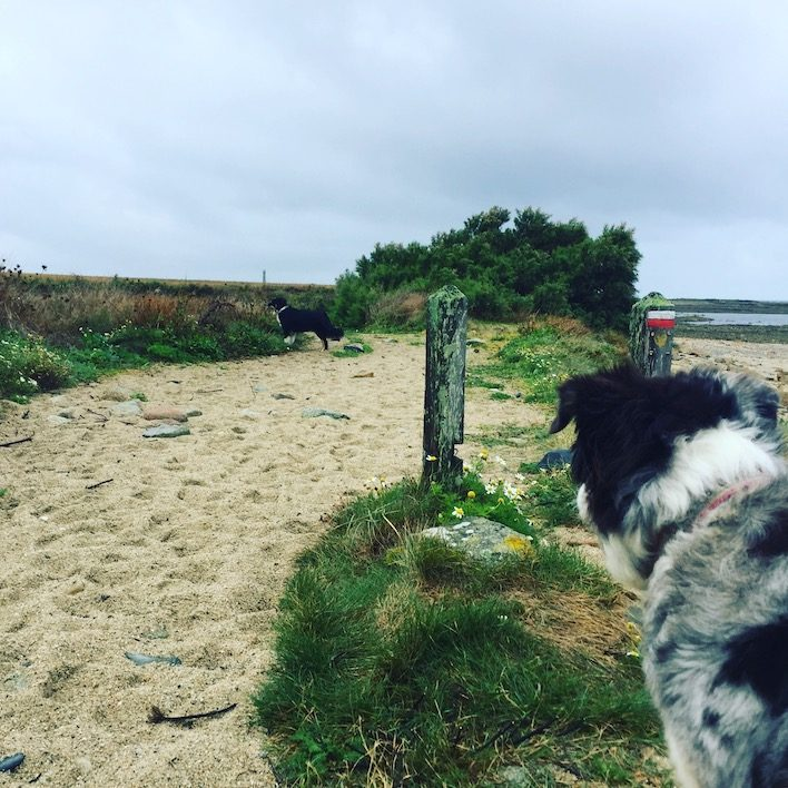 Frankreich Normandie Küstenwanderung Hund Sentier du Littoral GR 223 Zöllnerweg Weitwandern