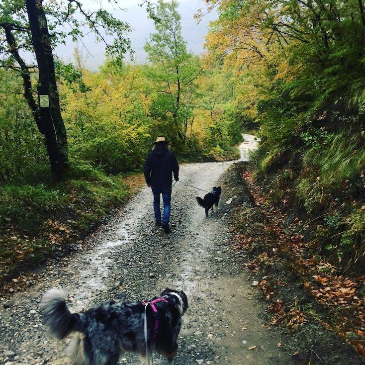Montenegro Hund Camper Camping Wohnmobil