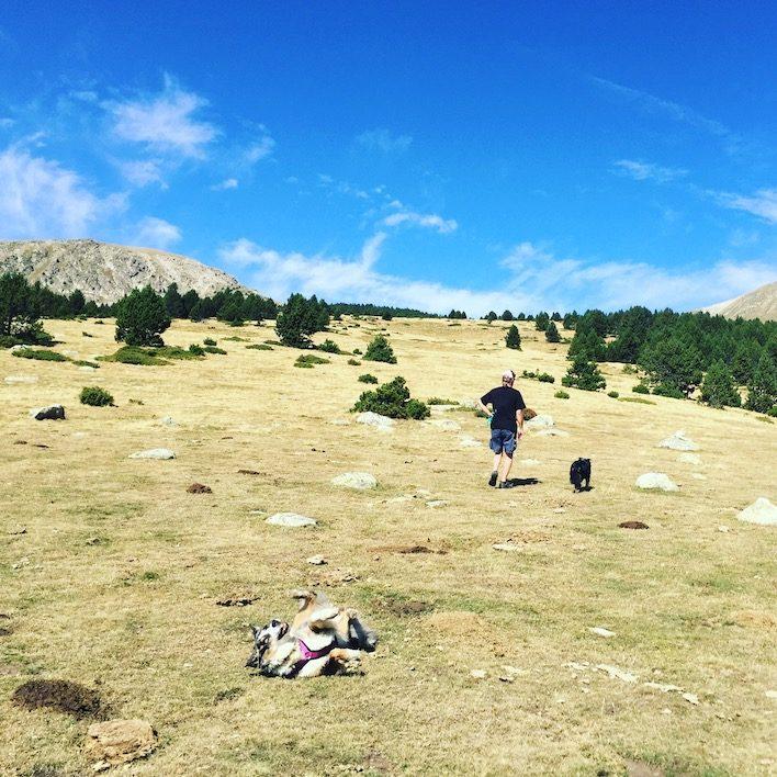 Cerdanya Wandern Wanderung Hund Spanien Katalonien Tessa Plana del Lles