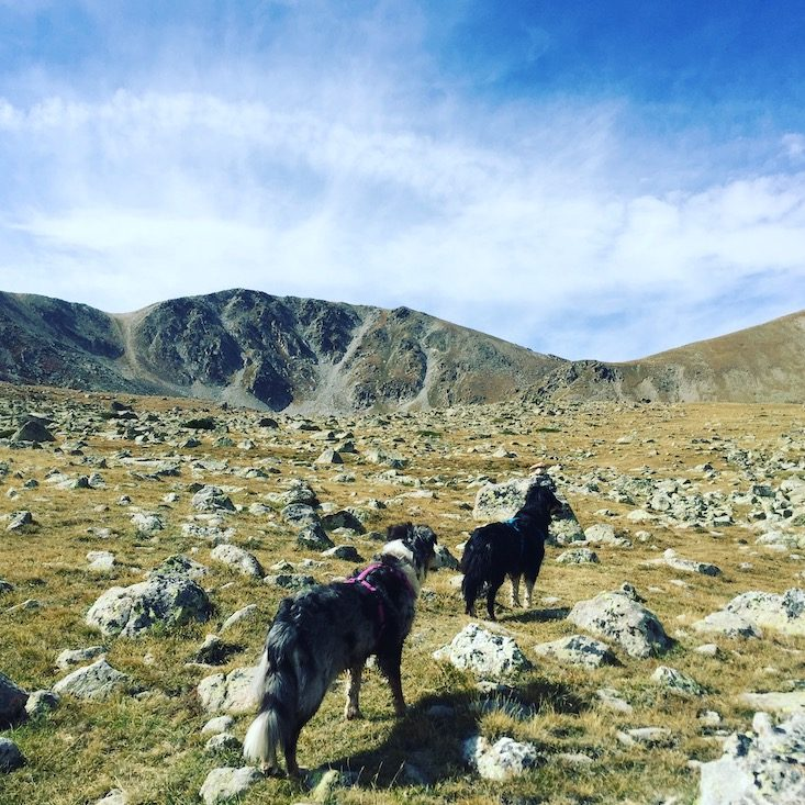 Wandern mit Hund Pyrenäen Spanien Katalonien Estanys de la muga Refugi cap del Rec