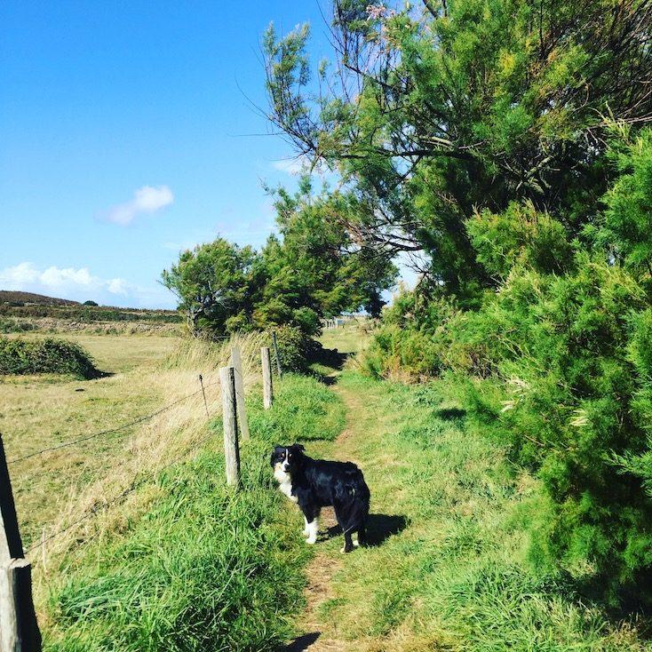 Normandie Frankreich wandern mit Hund Wanderung Küstenwanderung