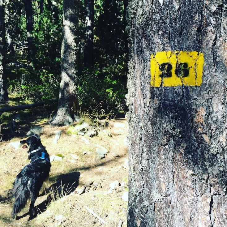 Cerdanya Wandern mit Hund Pyrenäen Spanien Katalonien Australian Shepherd