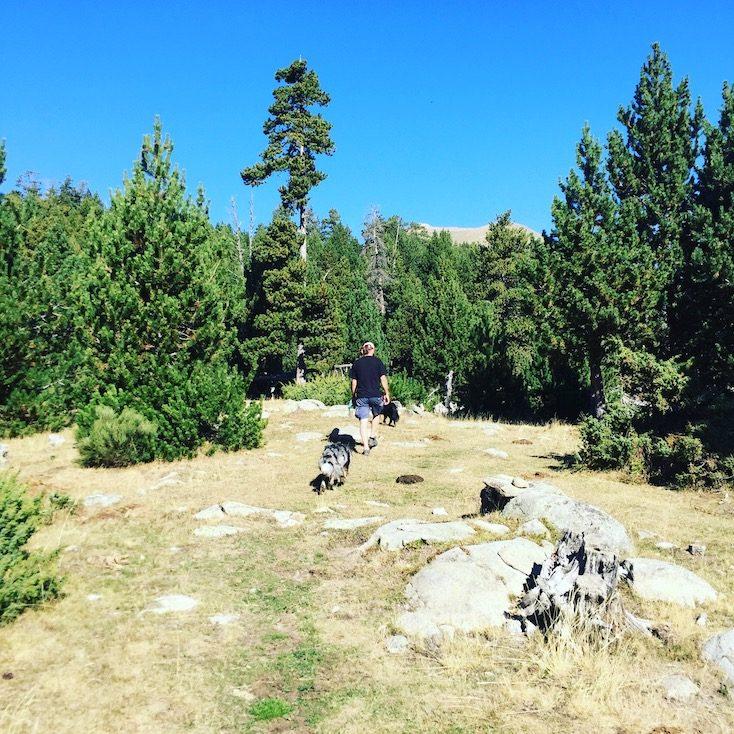 Spanien Pyrenäen Wanderung Hund Lichtung Kiefernwald