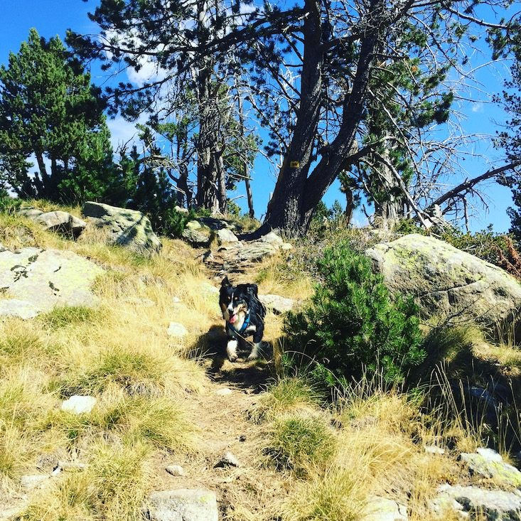 Wandern mit Hund Refugi Cap del Rec Spanien Pyrenäen Katalonien Erwandern Australian Shepherd