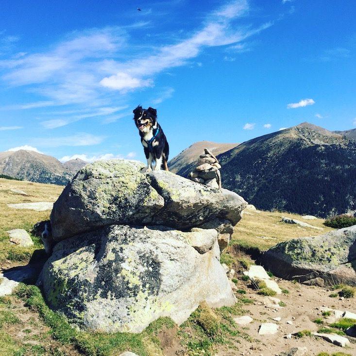 Wandern Hund Wanderung Pyrenäen Spanien Katalonien Plana Tosca de Lles