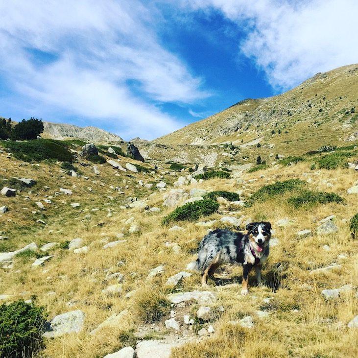 Refugi Cap del Rec Spanien Pyrenäen Wandern mit Hund Australian Shepherd