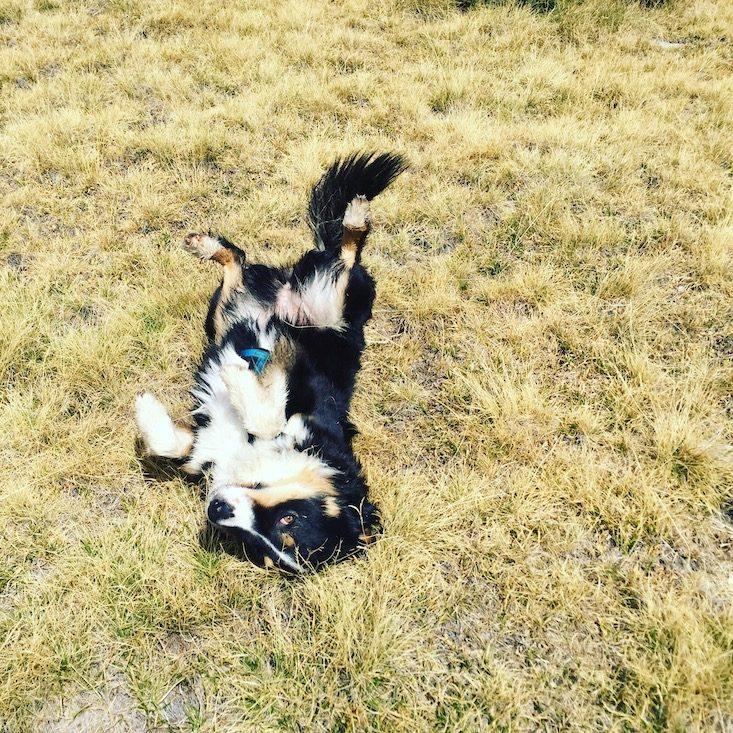 Wandern mit Hund Spanien Refugi Cap del Rec Pyrenäen Katalonien