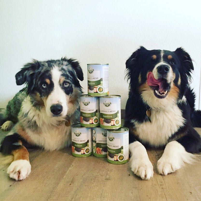 Langut-Menu Bellfor Insektenfutter Insektenprotein getreidefrei Hundefutter Futtertest