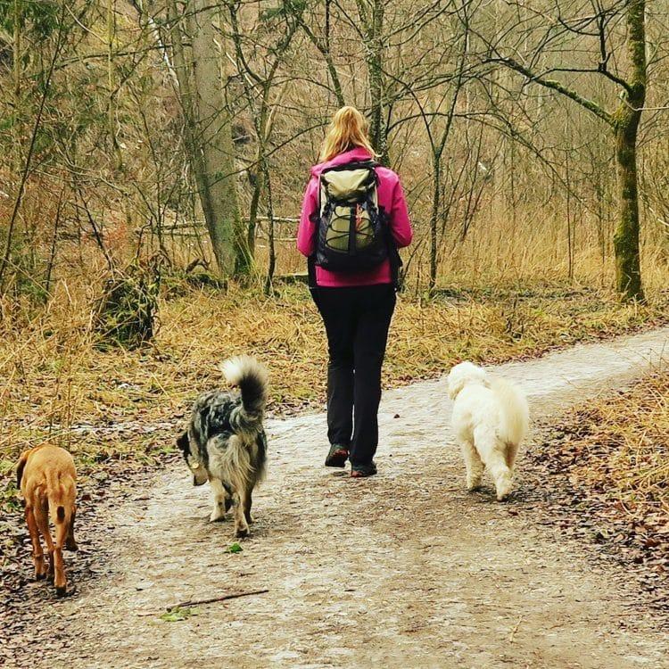 Wandern mit Hund, Fünf-Seen-Land, Bayern, Starnberg, Gruppenwanderung