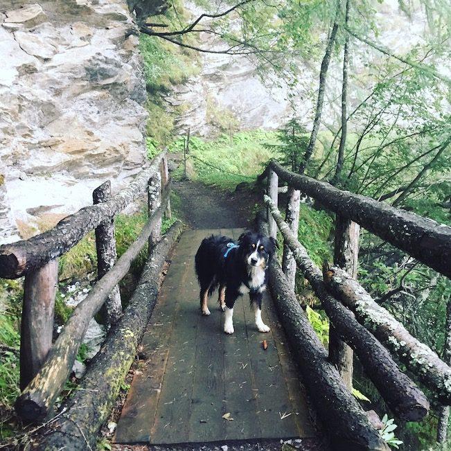Alpe-Adria-Trail mit Hund Australian Shepherd Wandern Österreich