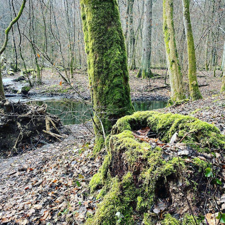 Starnberg Hundewanderung Maisinger Bach Bayern Deutschland Wanderung Fünf-Seen_land