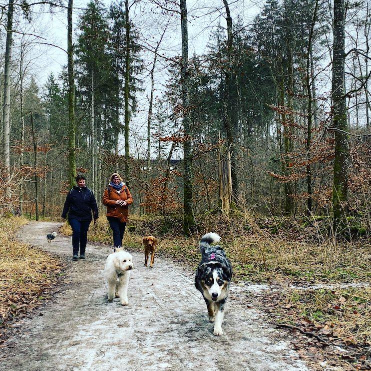 ErlebnisHunde Wandern mit Hund Gruppenwanderung Rundweg Maisinger Schlucht Starnberg Fünf-Seen-Land Bayern