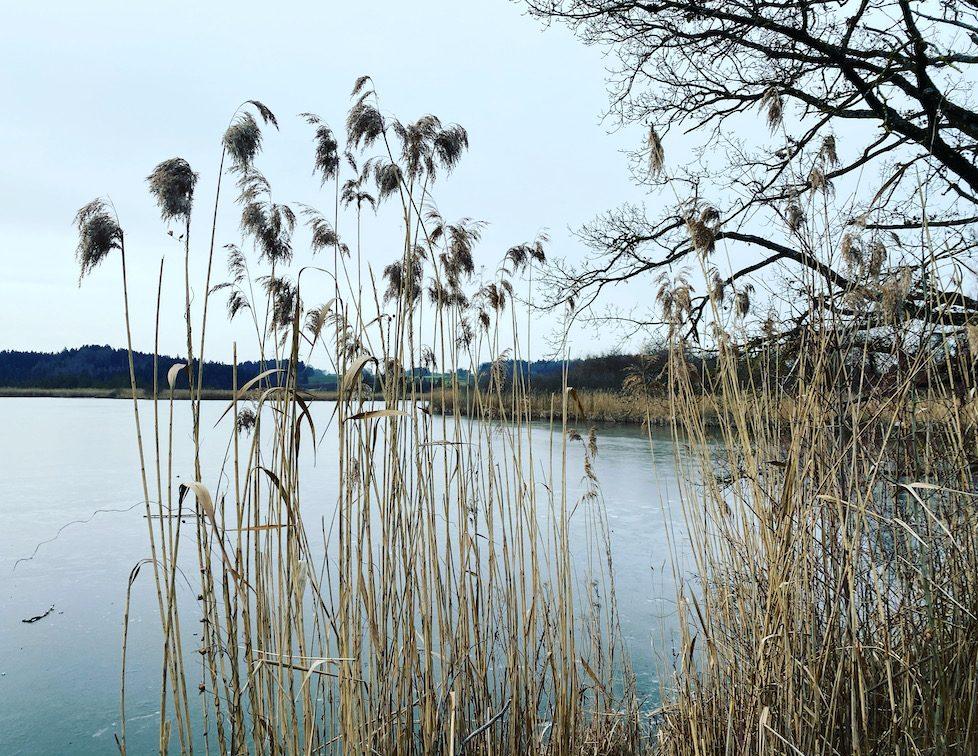 Maisinger See Fünf-Seen-Land Wandern mit Hund Bayern Hundewanderung Naturschutzgebiet