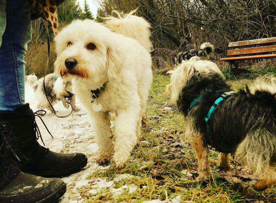 ErlebnisHunde Wandern mit Hund Hundegruppe Starnberg Maisinger Schlucht Fünf-Seen-Land Bayern