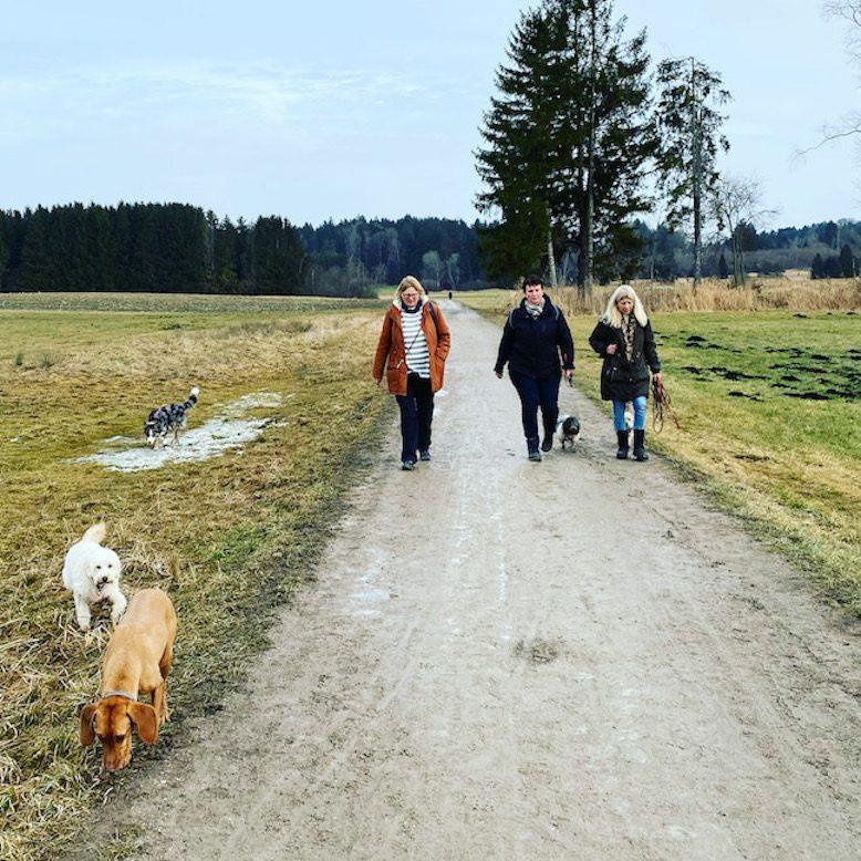 ErlebnisHunde Hundewanderung Wandern mit Hund Starnberg Bayern Für-Seen-Land Maisinger See
