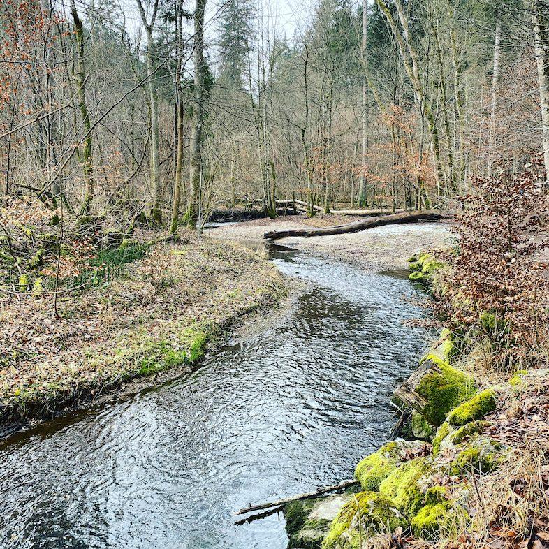 Wandern mit Hund Starnberg Gruppenwanderung Maising Fünf-Seen-Land Bayern Winterwandern Naturschutzgebiet