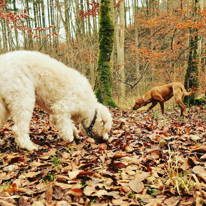 ErlebnisHunde, Starnberg Maisinger Schlucht, Bayern Wandern mit Hund , geführte Hundewanderung Fünf-Seen-Land