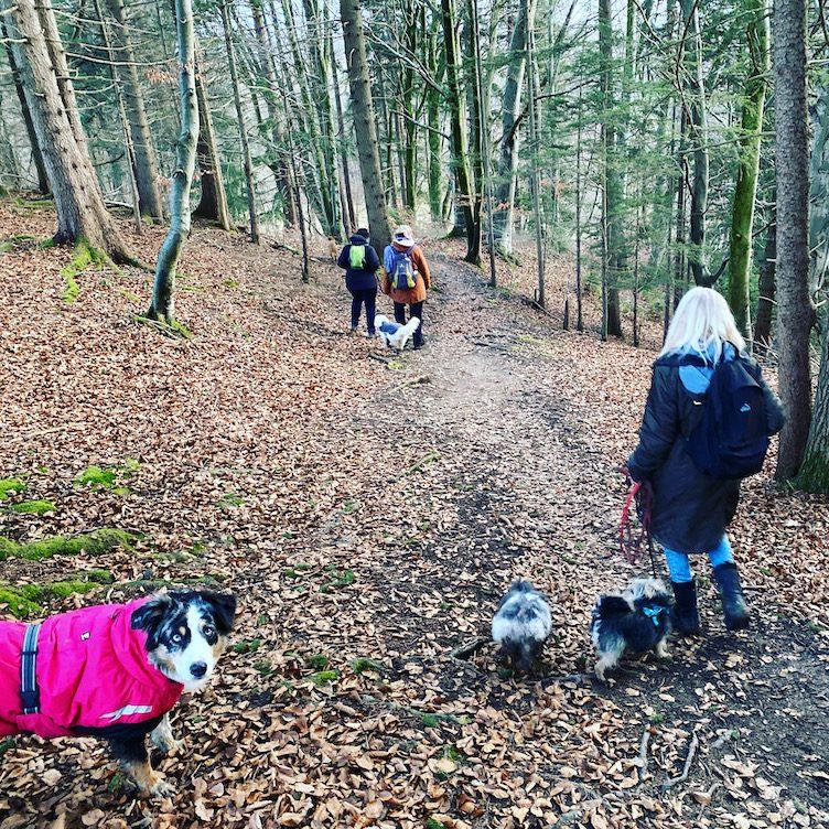 ErlebnisHunde Wandern mit Hund Hundewanderung Starnberg Bayern Fünf-Seen-Land Gruppenwanderung Maising