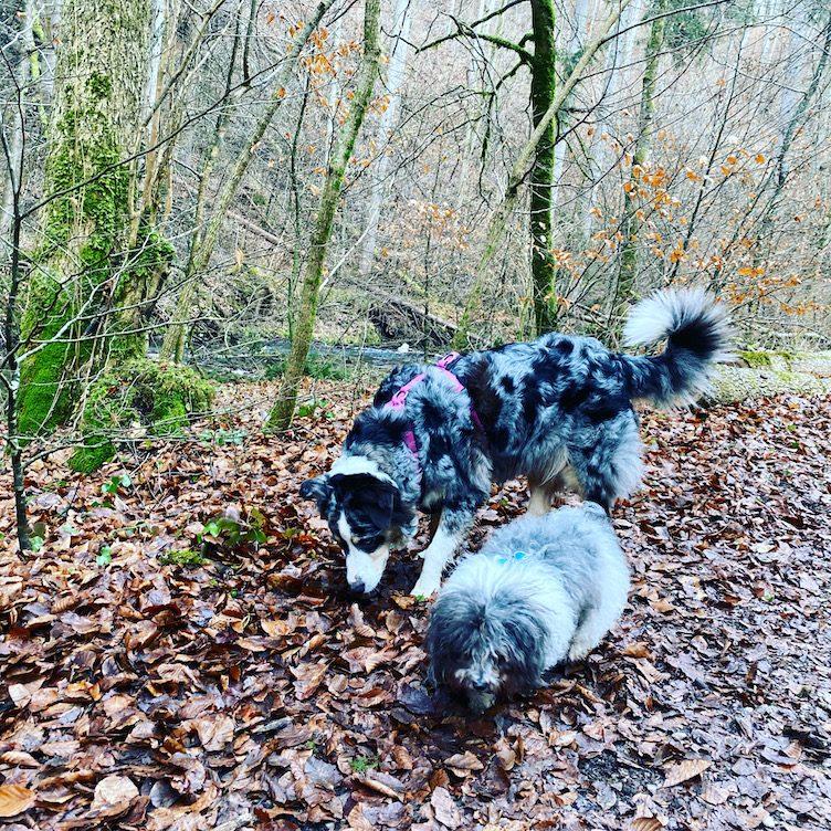 ErlebnisHunde Wandern mit Hund Hundewanderung Gruppenwanderung Bayern Fünf-Seen-Land Maisinger Schlucht
