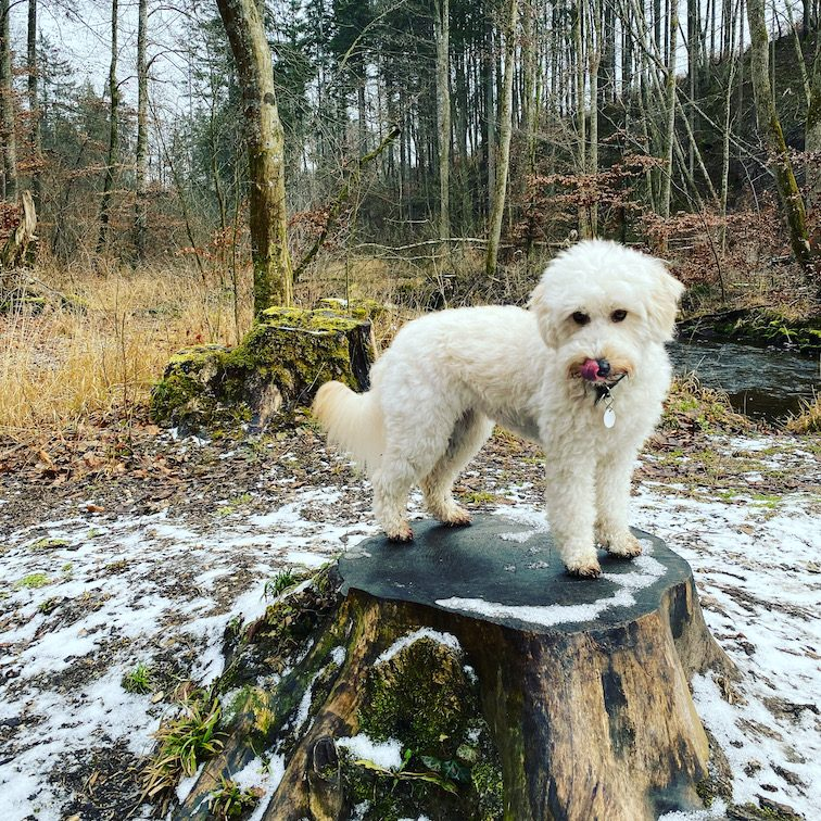 ErlebnisHunde Wandern mit Hund Hundewanderung Gruppenwanderung Starnberg Maisinger Schlucht Maising Bayern Fünf-Seen-Land