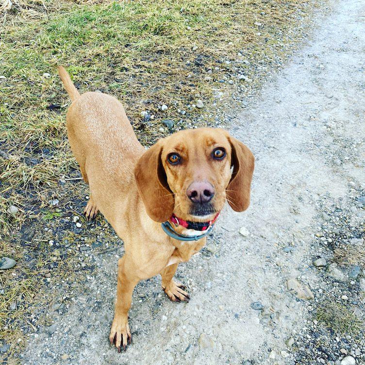 ErlebnisHunde Wandern mit Hund Jagdhund Hundewanderung Starnberg Fünf-Seen-Land Bayern Maisinger See Rundweg