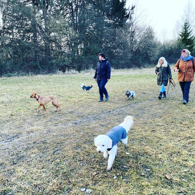 ErlebnisHunde Hunde-Erlebnis Hundewanderung wandern mit Hund Maising Starnberg Bayern Fünf-Seen-Land