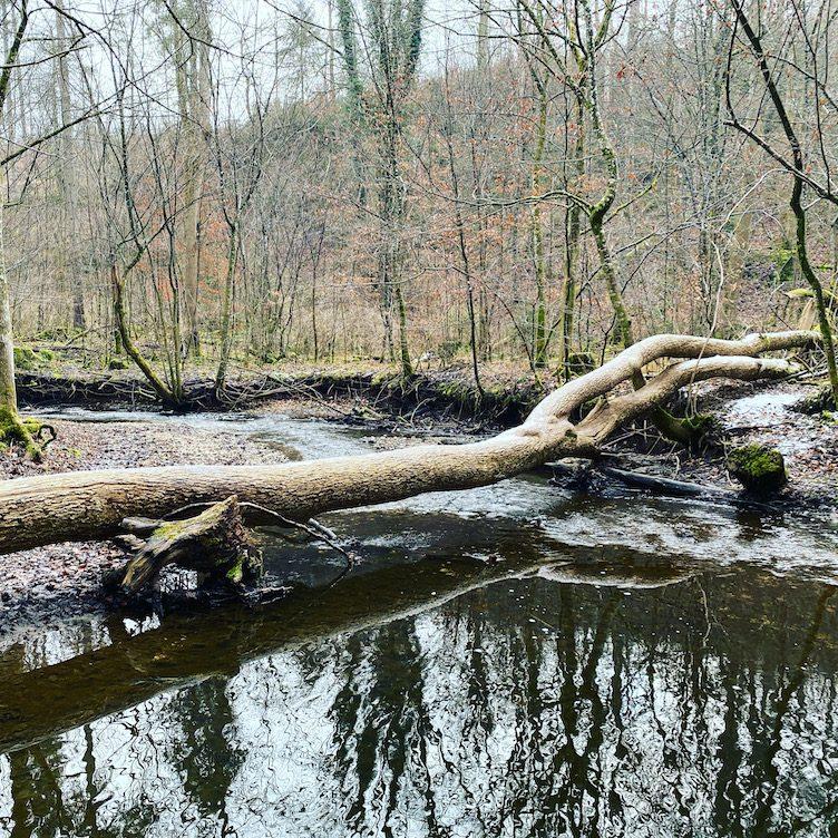Starnberg, Maisinger Schlucht Hundewanderung, geführte Wanderung, Bayern Deutschland