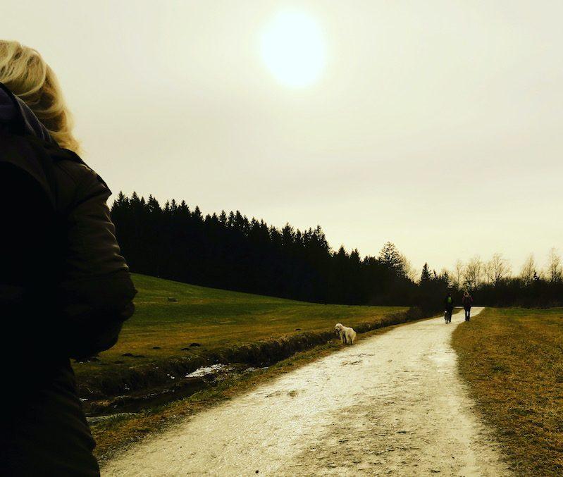 Wandern mit Hund Maisinger See Fünf-Seen-Land Bayern Starnberg geführte Wanderung Winterwanderung