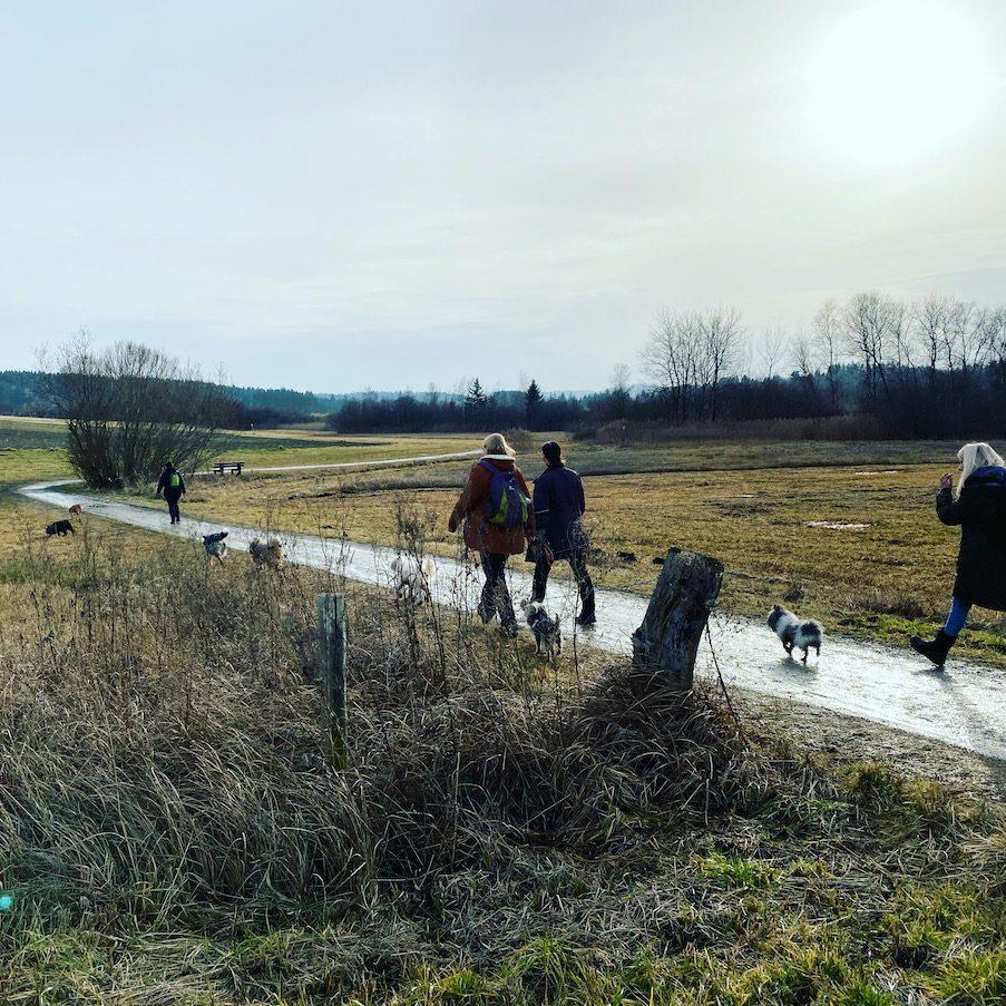 ErlebnisHunde Wandern mit Hund Starnberg Maisinger See Naturschutzgebiet Fünf-Seen-Land Abenteuer mit Hund