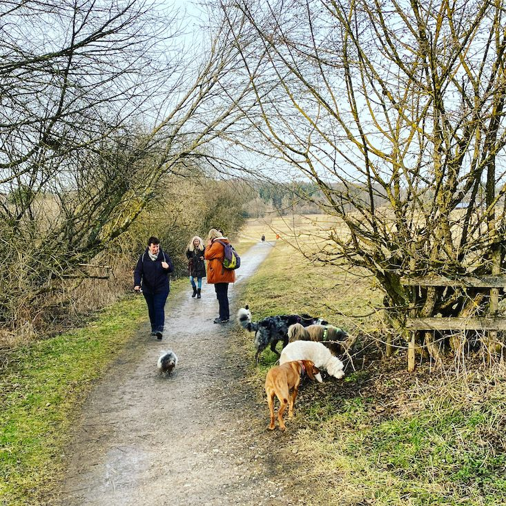 ErlebnisHunde Unterwegs mit Hund Wanderung Starnberg Maisinger See Rundweg Bayern Fünf-Seen-Land Winterwandern