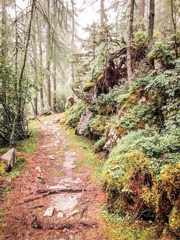 Alpe-Adria-Trail Weitwanderweg Alpen Hund Fernwandern