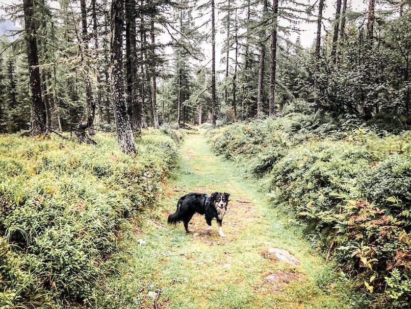 Alpe-Adria-Trail mit Hund Kärnten wandern